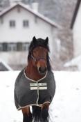 Horseware Amigo XL Turnout Lite