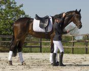 QHP Sparkle Fleece Bandagen